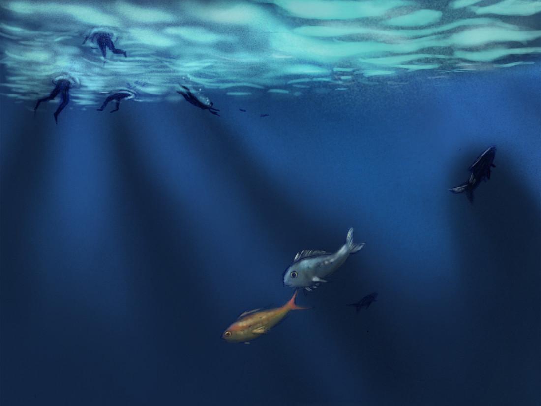 barsotto il mare